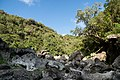 Fond de la ravine sèche - panoramio.jpg