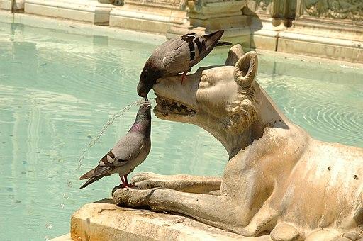Fonte Gaia, Piazza del Campo (Siena), duiven drinken van het water dat uit de mond van een van de wolvinnen stroomt