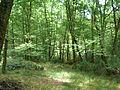 Forêt du Gâvre.jpg