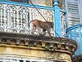 Forashgong Old Dhaka27.jpg