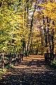 Forest (187685029).jpeg