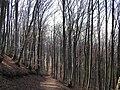 Forest (301032904).jpg