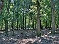 Forest - panoramio - paulnasca (61).jpg