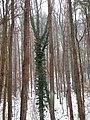 Forest Park Prešov 18 Slovakia3.jpg
