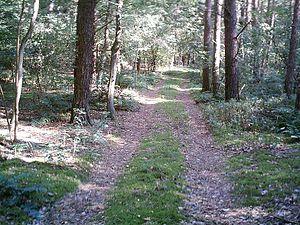 Hatten - Forest Track in Hatten