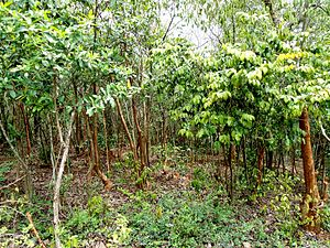 Eastern Highlands moist deciduous forests - Deciduous Forests during Monsoon along the Eastern Ghats