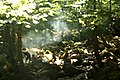 Forest barbecue (29241314188).jpg