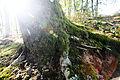 Forest light (3337718883).jpg