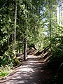 Forest path. SEE DESCRIPTION IN PANORAMIO - panoramio.jpg