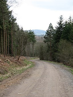 Forest track, Over Silton Moor - geograph.org.uk - 717228