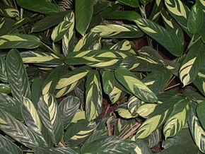 alt=Description de l'image Forraçao2.jpg.