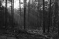Forst Rundshorn IMG 3358.jpg