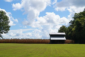 Foscue and Simmons Plantations - Foscue and Simmons Plantation, September 2014