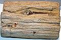Fossil wood (Yld'aa, banks of the Indigirka River, Yakutia, Siberia, Russia) 1 (39376921164).jpg