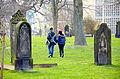 Frühling auf dem Neustädter Friedhof in Hannover mit Scilla-Blüte.jpg