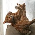 Fred and George 1 (2936111502).jpg