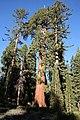 Fresno, CA, USA - panoramio (11).jpg