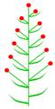 Frondose beblätterung (inflorescence).PNG