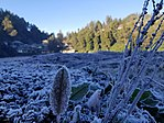 Frost at Ranu Pani on 4 August 2018 by Susanto Tan.jpg