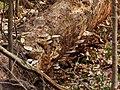 Fungi P4100085.JPG