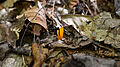 Fungus - Algonquin Provincial Park, Ontario 11.jpg