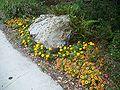 Gainesville FL Kanapaha Botanical Gardens flowers02.jpg