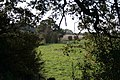 Gap through the hedge - geograph.org.uk - 1010048.jpg