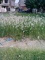 Garden's 19.jpg