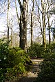 Garden walk. - panoramio.jpg