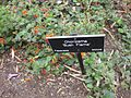 Gardenology.org-IMG 5056 hunt0904.jpg