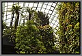 Gardens by the Marina Bay - Dome Clouds 04 (8353167154).jpg