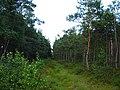 Garkalnes novads, Latvia - panoramio - SkyDreamerDB (26).jpg