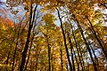 Gatineau Park, October 2018 (39) (31456312218).jpg