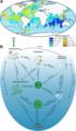 Gelatinous biomass and the biological pump.webp