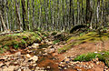 Gfp-michigan-porcupine-mountains-state-park-stream-flowing-through-the-woods.jpg