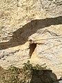 Ggantija, Gozo 74.jpg