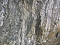 Gneiss (Archean; Norris South roadcut, Madison County, Montana, USA) 2 (44615258605).jpg