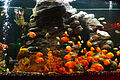 Gold fishes.jpg