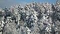 Gorlice Góra Parkowa - panoramio (8).jpg