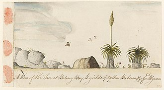 Arthur Bowes Smyth - Image: Grass tree, or `A View of the Tree at Botany Bay, wh yields ye Yellow Balsam, & of a Wigwan A604006h