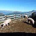 Grigna, Esino Lario, Lecco, Italy - panoramio.jpg