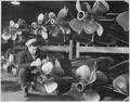 Group 4. Torpedo room. England, circa 1944 - NARA - 540069.tif
