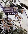 Gustave Caillebotte - Orchids (14980534220).jpg