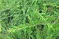 HK 西營盤 Sai Ying Pun 香港 中山紀念公園 Dr Sun Yat Sen Memorial Park plants green leaves Sept 2017 IX1 02.jpg