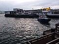 HK TST 尖沙咀 Tsim Sha Tsui 梳士巴利花園 Salisbury Garden 維多利亞港 Victoria Harbour March 2020 SSG 08.jpg