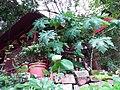 HK Tai Hang 銅鑼灣道 Tung Lo Wan Road 大坑福德古廟 Fuk Tak Temple July 2019 SSG 01.jpg