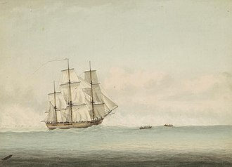 Myrmecia (ant) - HMS Endeavour, the ship that Joseph Banks was on when he discovered M. gulosa