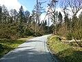 Handewitter Forst Schotterweg Mitte nach Xaver 2014.jpg