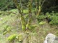 Harz Brocken Sept-2015 IMG 6447.JPG