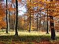 Henleyhill Wood - geograph.org.uk - 1050614.jpg